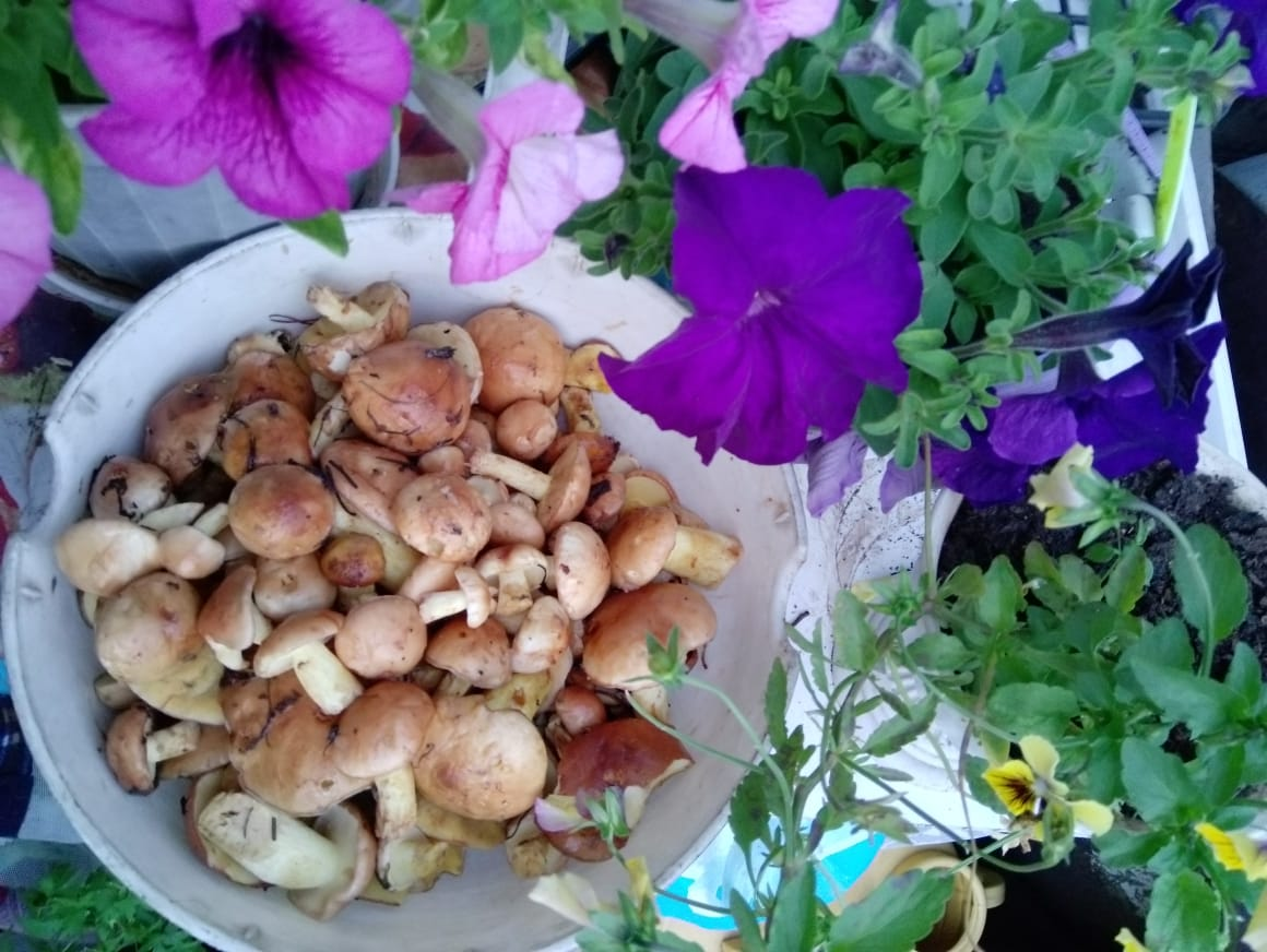 «Домашние заготовки: маслята»из рубрики Домашний пир