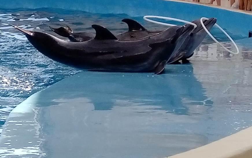 «Представление в дельфинарии» из рубрики Олюшкины сказки