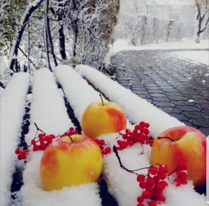 «Просить ли снега у зимы» из рубрики Восадули